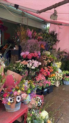 My Flower, Beautiful Flowers, Beautiful Places, Beautiful Scenery, Lotus Flower, Animals Beautiful, Spring Aesthetic, Flower Aesthetic, Nature Aesthetic