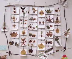 light table tracing/art in the reggio classroom Kids Crafts, Easy Fall Crafts, Leaf Crafts, Crafts To Make, Reggio Emilia, Autumn Activities, Activities For Kids, Tree Study, Autumn Art