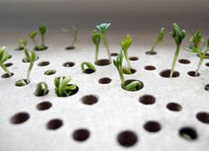 Plant Growing Sprout Table