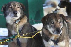 Poncho e Gonzo sono fratelli. E insieme fanno parte dei 120 cani da slitta del Muddy Paw Sled Dog Kennel che trasportano i turisti durante la notte nelle terre del New Hampshire del nord. da quando Gonzo è rimasto cieco, è Poncho che lo guida nelle traversate, gli dà la direzione, la velocità, gli presta i suoi occhi. Poncho una volta ha strappato dalla neve suo fratello afferrandolo con i denti per l'imbracatura