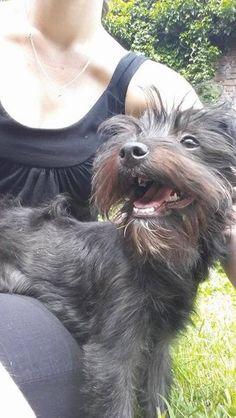 Lizzy, type yorkshire noir femelle née le 18/02/2015 (59) Adoption, Catania, Milano, Yorkshire, Type, Dogs, Female, Dog, Animaux