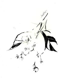 Apple blossoms. Black and white drawing.