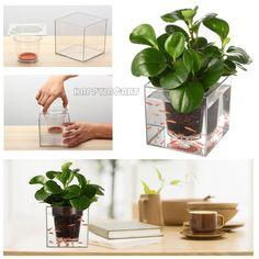 Escritorio de oficina creativa envío planta de riego Pot maceta maceta cubo pecera transparente, peces y plantas dos-en-uno BHW415