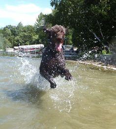 Happy water dog