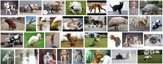 """Animal """"inspiration porn"""": Implications for othering and accommodation - Sociological Images"""