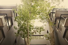 JB Arquitectos - Maria de la Rivera (2015) Edificio Vivienda Multifamiliar - Paseo Victorica 890 - Tigre Plants, Architectural Firm, Walks, Architects, Buildings, Plant, Planting, Planets