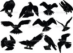 Hawk Vector Silhouettes
