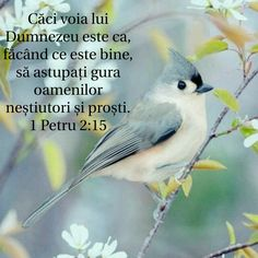 1 Petru 2:15 He First Loved Us, Biblical Verses, Bless The Lord, Jesus Loves You, God Jesus, Love You, Frases, Bible, Pictures
