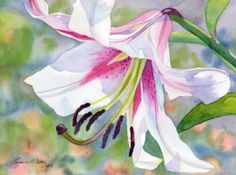 Original watercolor painting by Lorraine Watry, Stargazing Lily, is a close-up of a pink and white lily in the bright sunlight.