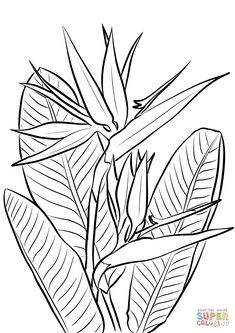 to see printable version of Bird of Paradise Plant Coloring page Plant Painting, Plant Drawing, Fabric Painting, Bird Of Paradise Tattoo, Birds Of Paradise Plant, Paradise Garden, Paradise Painting, Doodle Drawing, Posca Art