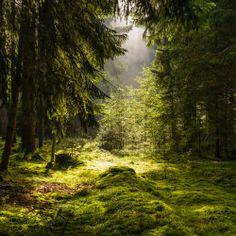 "earth-paths-green:  ""morning III by indojo  """