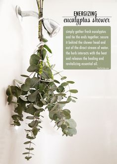 Aromatic Shower With Fresh Eucalyptus - The Chic Site