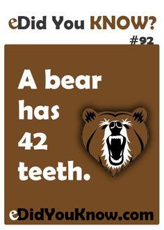 Did you know? Dental Fun Facts, Wtf Fun Facts, Funny Facts, Crazy Facts, Random Facts, Fun Facts For Kids, Jokes For Kids, Kid Jokes, Dental Humor