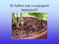 Testvériskolai Projekt Iregszemcse - Győr: A Víz Világnapja Asparagus, Vegetables, Plants, Studs, Vegetable Recipes, Plant, Veggies, Planets