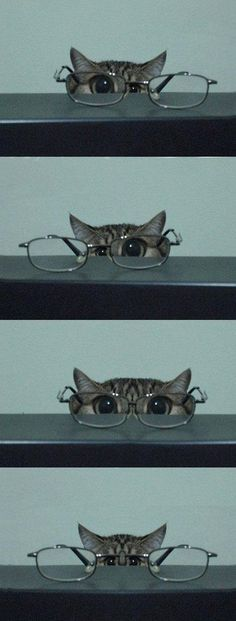 Glasses | Follow board  on: http://pinterest.com/riccai/mes-amis-les-animaux/