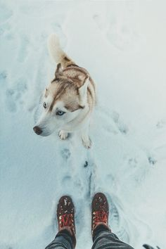 ikwt:  Travel Mate (zachallia) |instagram