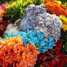 En agosto las flores toman especial protagonismo en #medellin Durante ese mes y por 10 días los maestros silleteros asaltan las calles durante la #fiestadelasflores  Especial Medellin  www.placeok.com  #placeok #placeokstudio #travelblog #travelbloggers #vivemedellin #colombiaismagicalrealism #colombiaesrealismomagico #flowerpower #flowershow #flowers #natureaddict #ontheblog #beautifuldestinations
