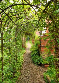 Garden path pergola covered in vines and fruiting trees trained to grow over