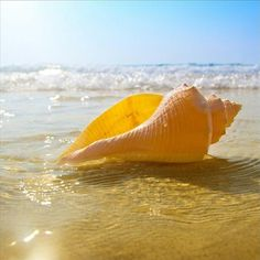 I love sea shells, and warm water, wish I was there and not in this below 0 stuff:(*