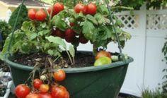 6 Tips for New Vegetable Gardeners