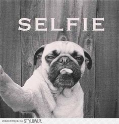 Pug takes a Selfie, too cute. Pug Love, I Love Dogs, Funny Animals, Cute Animals, Animal Fun, Photo Animaliere, Dog Selfie, Selfie Time, Cute Pugs