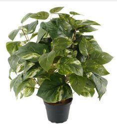 Planter for deg uten grønne fingre.