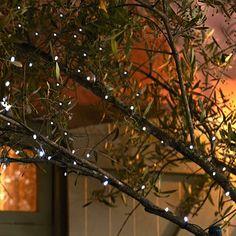 50 Everbright Solar Fairy Lights in garden lighting and ornaments at Lakeland Solar Fairy Lights, Diy Pallet Wall, Garden Illustration, Pallets Garden, Small Garden Design, Garden Accessories, Garden Crafts, Garden Inspiration, Garden Ideas