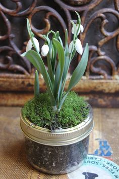 Bring Spring inside with snowdrops planted in a mason jar! | Grillfusion Blog