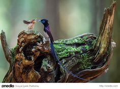 Minnoş Yavrularına Gösterdiği Şefkatle Cümle Alemi İmrendirecek 41 Ebeveyn Kuş