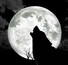 my-dog-barking-at-night