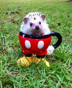 A very cute hedgehog