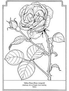 Free Printable Flower Coloring Pages For Kids In 2018