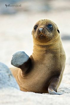 """""""Gimme Five"""" - #Seal"""
