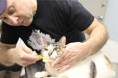 Nicholas Perrone brushes his cat Fifi's teeth at Blum Animal Hospital in Chicago. Many cat and dog owners have been embracing preventive dental care for their pets in recent years, including home care and professional cleanings. But there is a long list of barriers still to overcome.