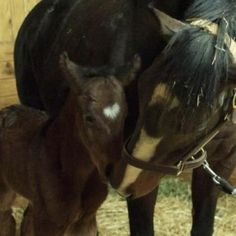 Keep a good thought for Rachel Alexendra, who is in serious condition from complications of delivering her beautiful new filly with the heart-shaped star. Rachel Alexandra's Filly