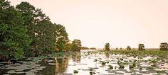 Sheldon Lake State Park & Environmental Learning Center — Texas Parks & Wildlife Department in houston ( no camping)