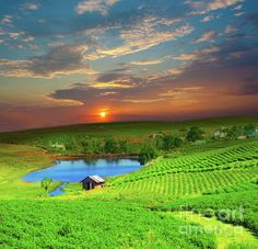 Tea plantation on central highland in Vietnam | Photo by MotHaiBaPhoto Prints with Pin-It-Button on FineArtAmerica