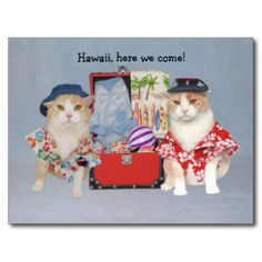Two Bubbas in two different Hawaiian shirts and a suitcase packed for the beach. You can customize the text. #funny #humor #cat #cats #kitty #kitties #funny #cat #funny #cat #photo #funny #cat #image #funny #cat #picture #funny #cats #funny #cats #photo #funny #cats #picture #funny #cats #image #funny #kitty #funny #kitty #picture #funny #kitty #photo #funny #kitty #image #cat #lover #cat #person #bubba #hilarious #cat #travel #hawaiian #cat #hawaiian #kitty #hawaiian #cats #hawaiian…