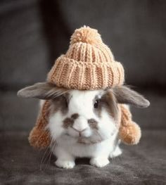 Melissa! You MUST make this for your bunnies