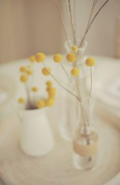 love these little yellow ball flowers, so simple