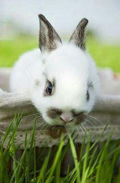 Adorable bunny @Planet Earth