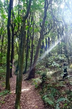 The Place of Snares: Bush walks, Birdwatching and an 800 year old Rimu… | Spin the Windrose
