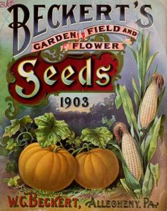 Front cover of 'Beckert's Garden, Field and Flower Seeds' 1903 with an illustration of pumpkins and sweet corn. W.G. Beckert, Allegheny, Pa. archive.org