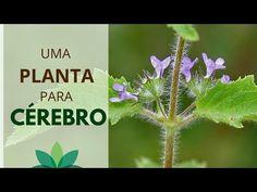 Uma planta BOA para o CÉREBRO! - YouTube Herbs, Youtube, Plants, Healing Herbs, Medicinal Plants, Natural Health, Home Remedies, Health Tips, Recipes