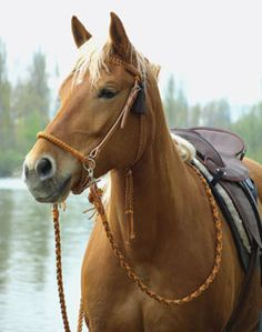 Bitless Bridle from Barefoot Saddles Cowboy Horse, Horse Tack, Horse Gear,  Cowboy Gear 142e33b1afe