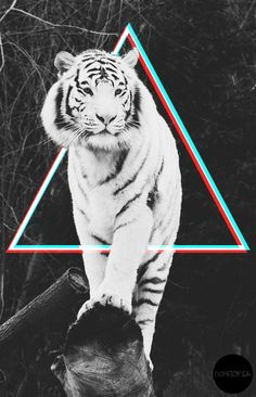 #tiger #hipster #triangle