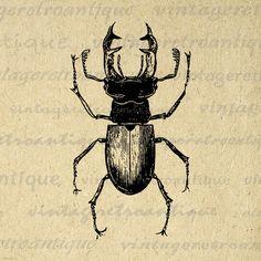 Printable Digital Stag Beetle Graphic by VintageRetroAntique