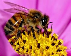 'Bee-Friendly' Plants Tainted with Bee-Killing Pesticides