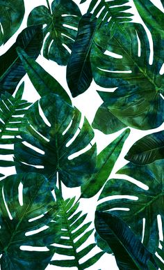 Brand Name: DUSTPROOFVEIL Pattern Type: Plant Pattern: Printed Shape: Square Technics: Woven Use: Seat,Decorative,Chair,Car Material: Peach skin cashmere pattern :: Tropical Plant Style: Cactus Motif Tropical, Tropical Leaves, Tropical Plants, Cute Wallpapers, Wallpaper Backgrounds, Iphone Wallpaper, Pattern Vegetal, Site Art, Photo Polaroid