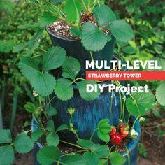 Multi Level Strawberry Planter DIY Project